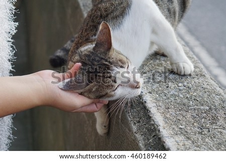 cat on concrete wall relaxing  with chin scratching