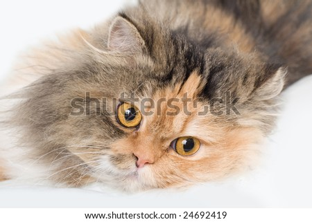 Cat on gray background