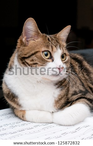 Cat on musical score - stock photo