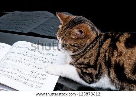 Cat on piano with musical score - stock photo