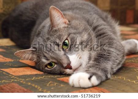 cat on sofa - stock photo