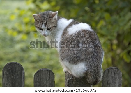 Cat on the fence - stock photo
