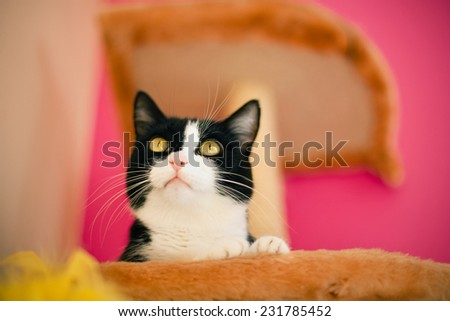 Cat on the floor watching attentively  - stock photo