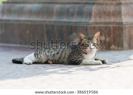 Cat on the ground in the park / stray cat