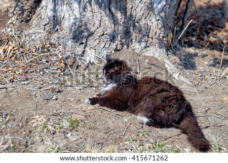 Cat on the ground, serious cat close up, young playful cat , domestic cat, relaxing cat, cat resting, elegant cat - stock photo