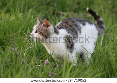 cat on the prowl - stock photo