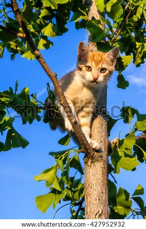Cat on the tree ginkgo at home garden looking in the camera with the sky as background - stock photo