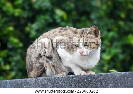 Cat on the wall. - stock photo