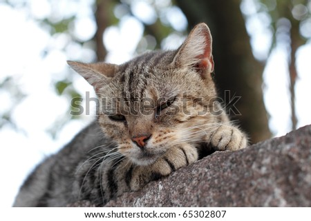Cat on the wall - stock photo