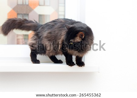 cat on the window in a new apartment house - stock photo