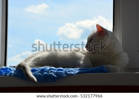 cat on the window, the cat basks in the sun