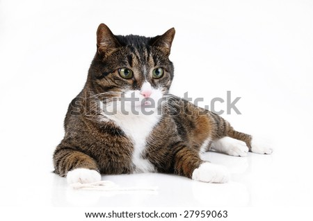 Cat on white background - stock photo
