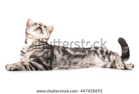 cat on white background.