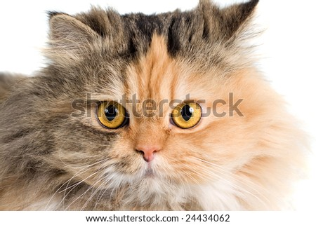Cat on white background. isolated. Please, see my portfolio with similar photos.