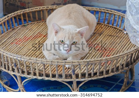 Cat on wicker basket.