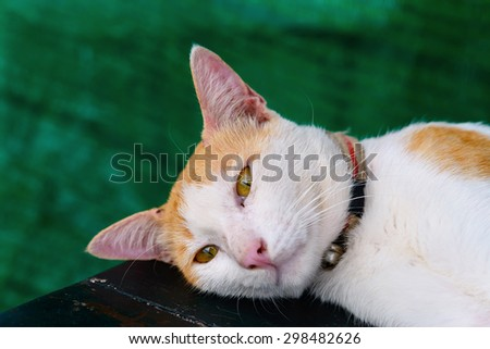 cat on wood table - stock photo