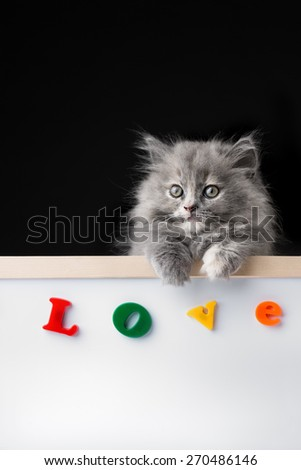 Cat or kitten isolated behind signboard - stock photo