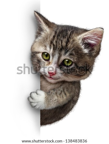 Cat or kitten with a blank vertical card sign as a cute feline with a smiling happy expression supporting and communicating a message pertaining to pet health care and welfare. - stock photo