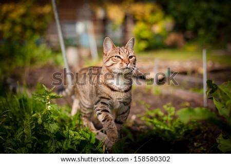 cat outdoors - stock photo