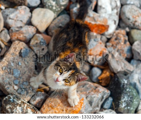 Cat outdoors looking into the camera - stock photo