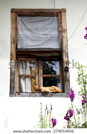 Cat outside the window - stock photo