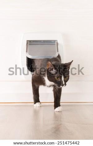 Cat passing through the cat door at home - stock photo