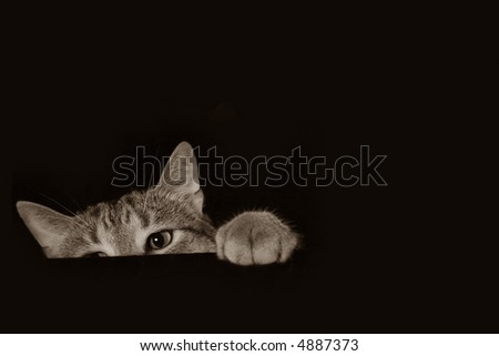 Cat peaking out from below - stock photo