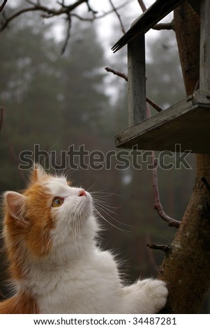 Cat peeking into bird house - stock photo