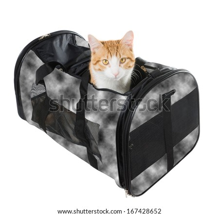 Cat peeking out of the bag-carrying - stock photo