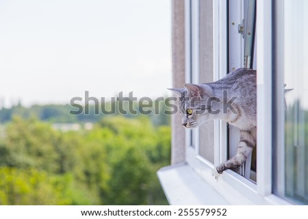 cat peeking out of the window - stock photo