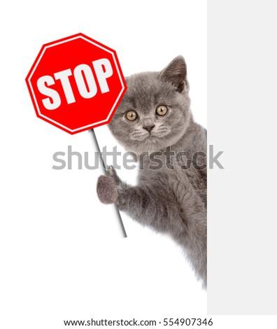 no more odor cat litter