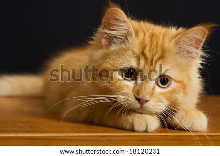 cat pet kitty - stock photo