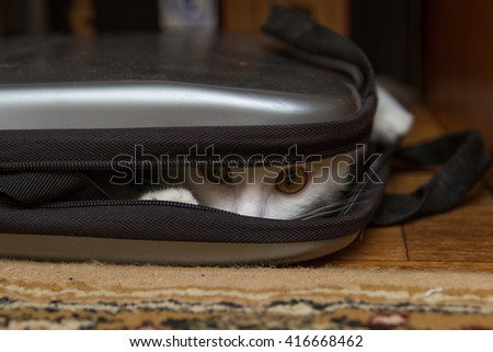 Cat playing hide and seek with a laptop bag.