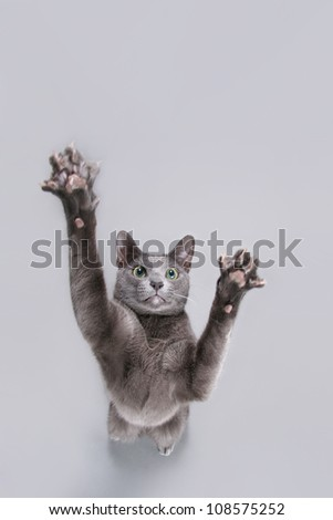 Cat playing, on gray background. - stock photo