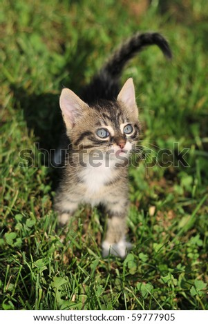 Cat playing on the grass - stock photo
