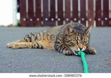 cat playing on the street