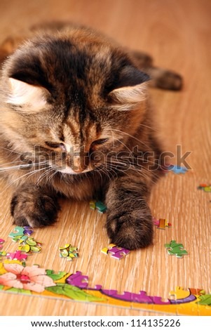 cat playing puzzle on the floor - stock photo