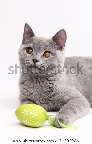 Cat playing with colored Easter eggs - stock photo