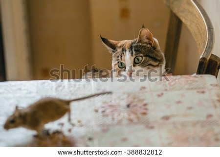 Cat playing with little gerbil mouse on the table. Natural light - stock photo