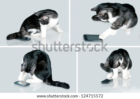 Cat playing with touch screen smart phone. - stock photo