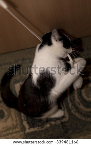 Cat plays with fake mouse