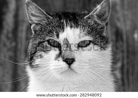 Cat portrait-black and white photo