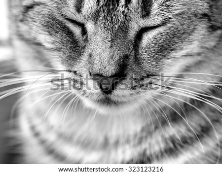 Cat portrait close up in black and white photo. Cat face - stock photo
