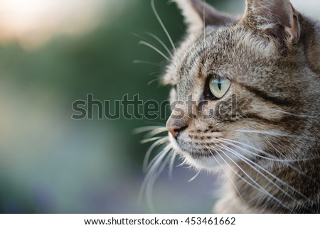 Cat portrait close up, only head crop, looking to the top,  - stock photo