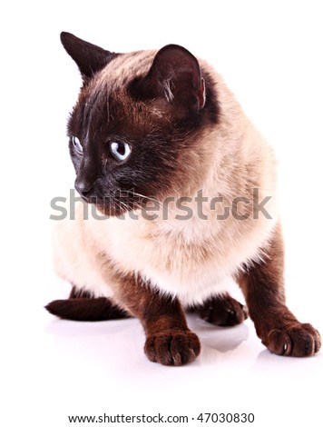 Cat portrait isolated on white - stock photo