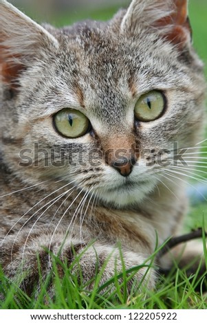 cat portrait with yellow-green eyes