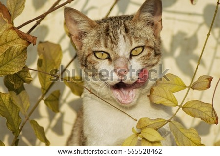 animal face stock images royaltyfree images  vectors
