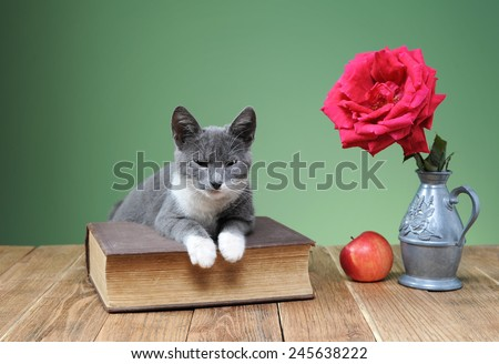 Cat posing for the book in the studio - stock photo