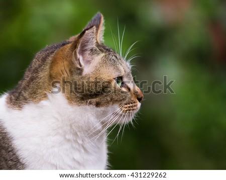 Cat profile - stock photo