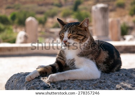 Cat relaxing in shadow during a warm day - stock photo